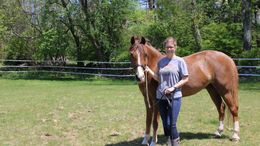 Chestnut Welsh Cob in Grand Rapids, MI