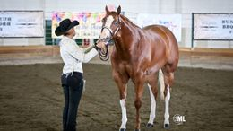 Chestnut Quarter Horse in Langley, WA