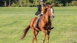 Chestnut Appendix Quarter Horse in Remsenburg, NY