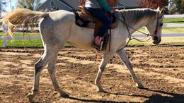 White Appendix Quarter Horse in Greenville, IL