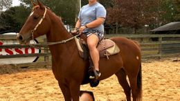 Sorrel Quarter Horse in vancleave, MS