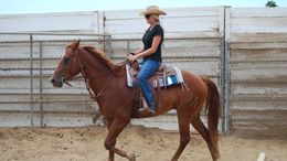 Sorrel Quarter Horse in Norco, CA