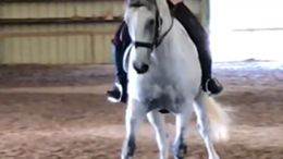Grey American Warmblood in Virginia Beach, VA