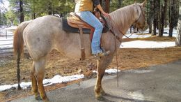 Roan Quarter Horse in Flagstaff, AZ