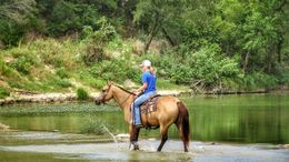 Buckskin Quarter Horse in Little Rock, AR