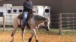 Grey Quarter Horse in Reagan, TN