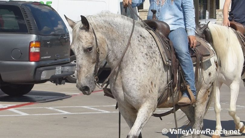 Other Appaloosa in Dallas, TX