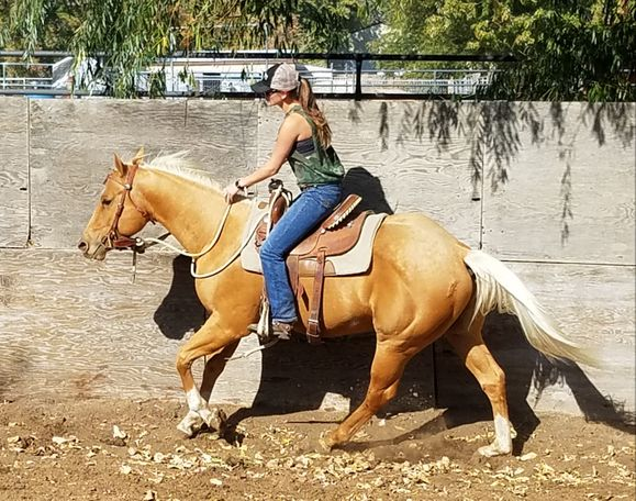 Roan Quarter Horse in Kennewick, WA