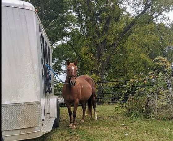 Chestnut Quarter Horse in Shoals, WV