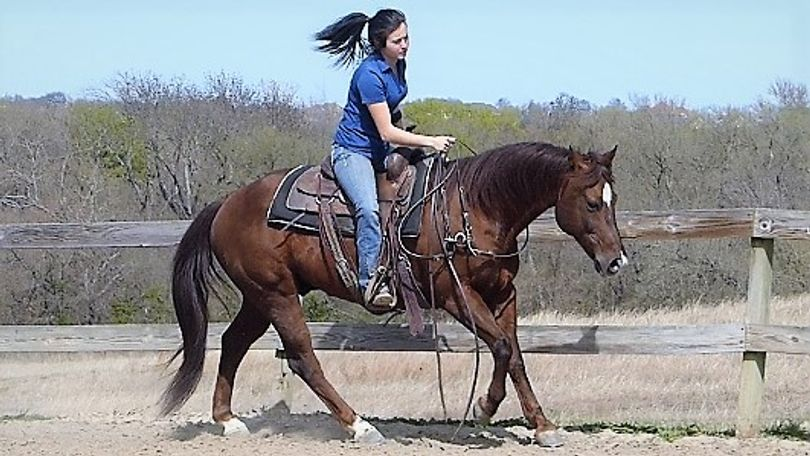 Chestnut Quarter Horse in Dallas, TX