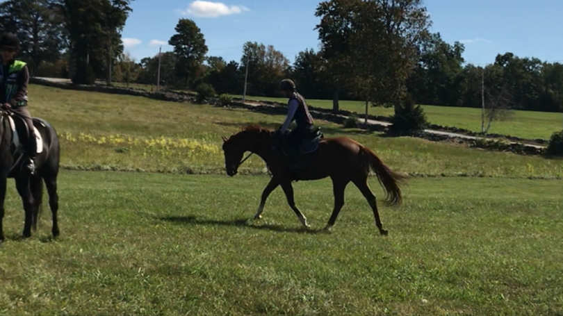Chestnut Thoroughbred in Wellesley, MA