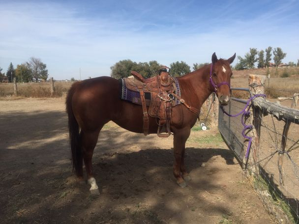 Chestnut Quarter Horse in Homedale, ID
