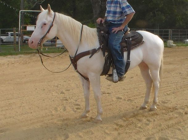 White Quarter Horse in Mcminnville, TN