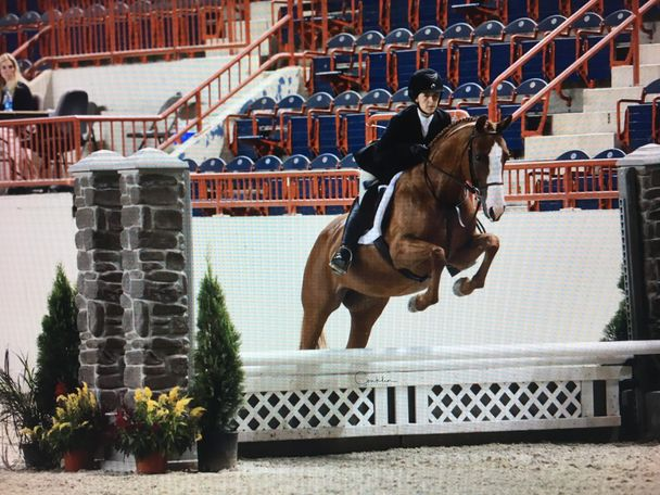 Chestnut Swedish Warmblood in Reinholds, PA