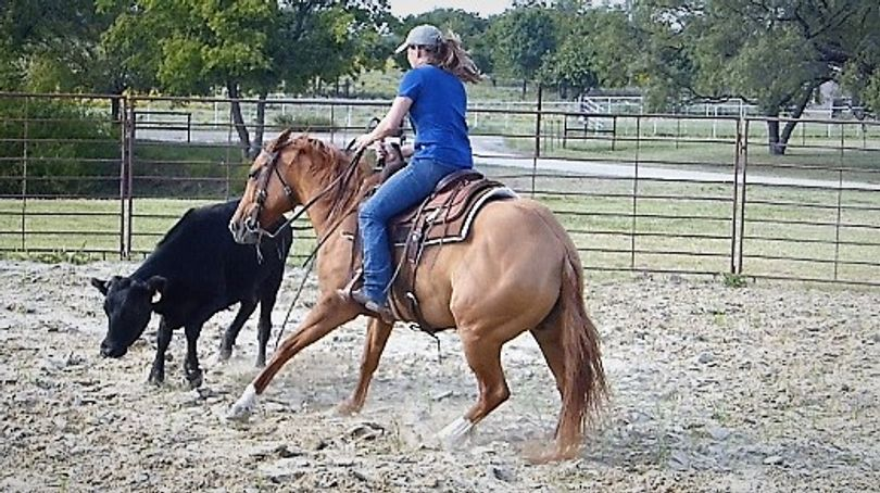 Dun Quarter Horse in Dallas, TX