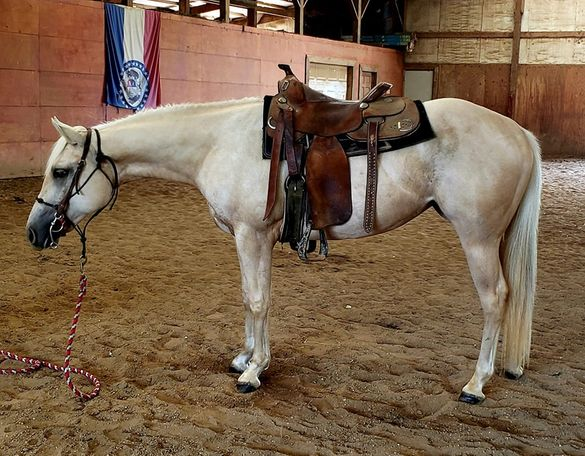 Palomino Appaloosa in Winfield, MO