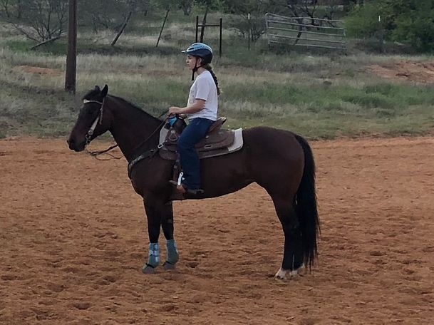 Bay Quarter Horse in Aurora, TX