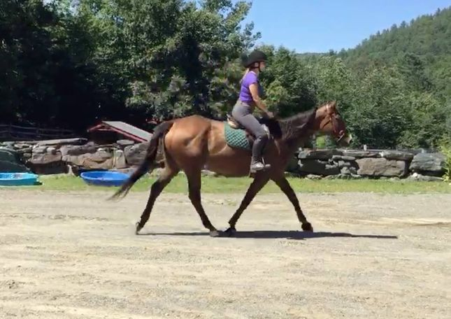 Bay Thoroughbred in West Townshend, VT
