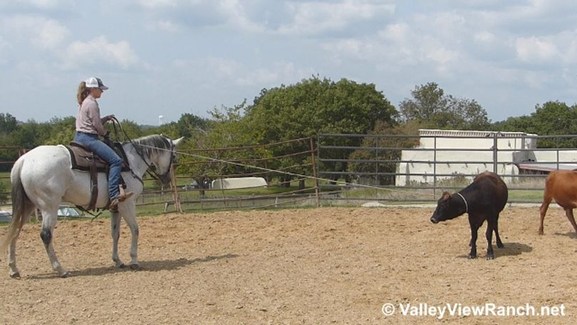 Grey Quarter Horse in Dallas, TX
