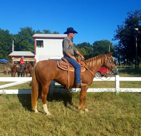 Sorrel Quarter Horse in Winfield, MO