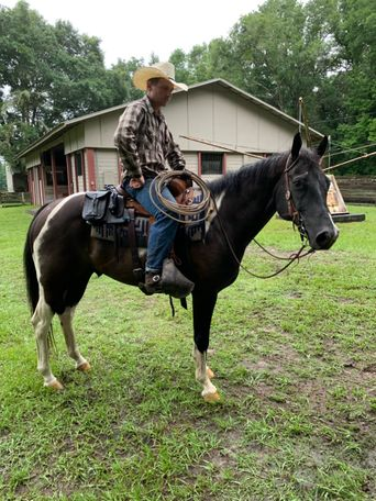 Black Quarter Horse in La Crosse, FL