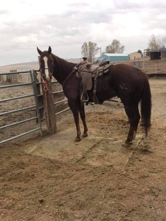 Chestnut Appendix Quarter Horse in lewiston, ID