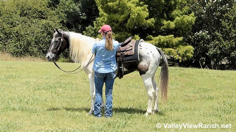Oreo - 13 3/14 0HH, 7 year old, Grey Appaloosa/Paint Gelding