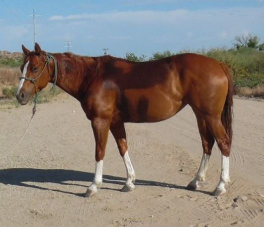 Sorrel Quarter Horse in Congress, AZ