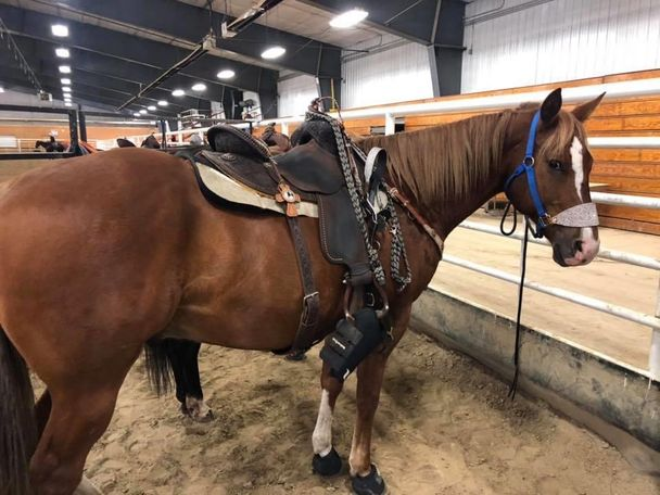 Chestnut Quarter Horse in Bismarck, ND