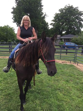 Black Tennessee Walker in GALLATIN, TN