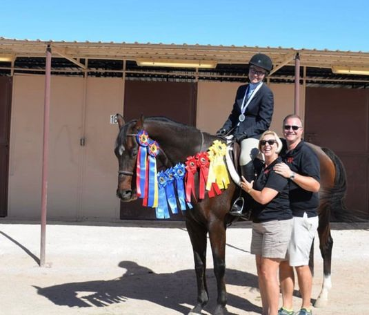 Bay Swedish Warmblood in Las Vegas, NV