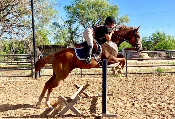 Chestnut Thoroughbred in Breckenridge, TX